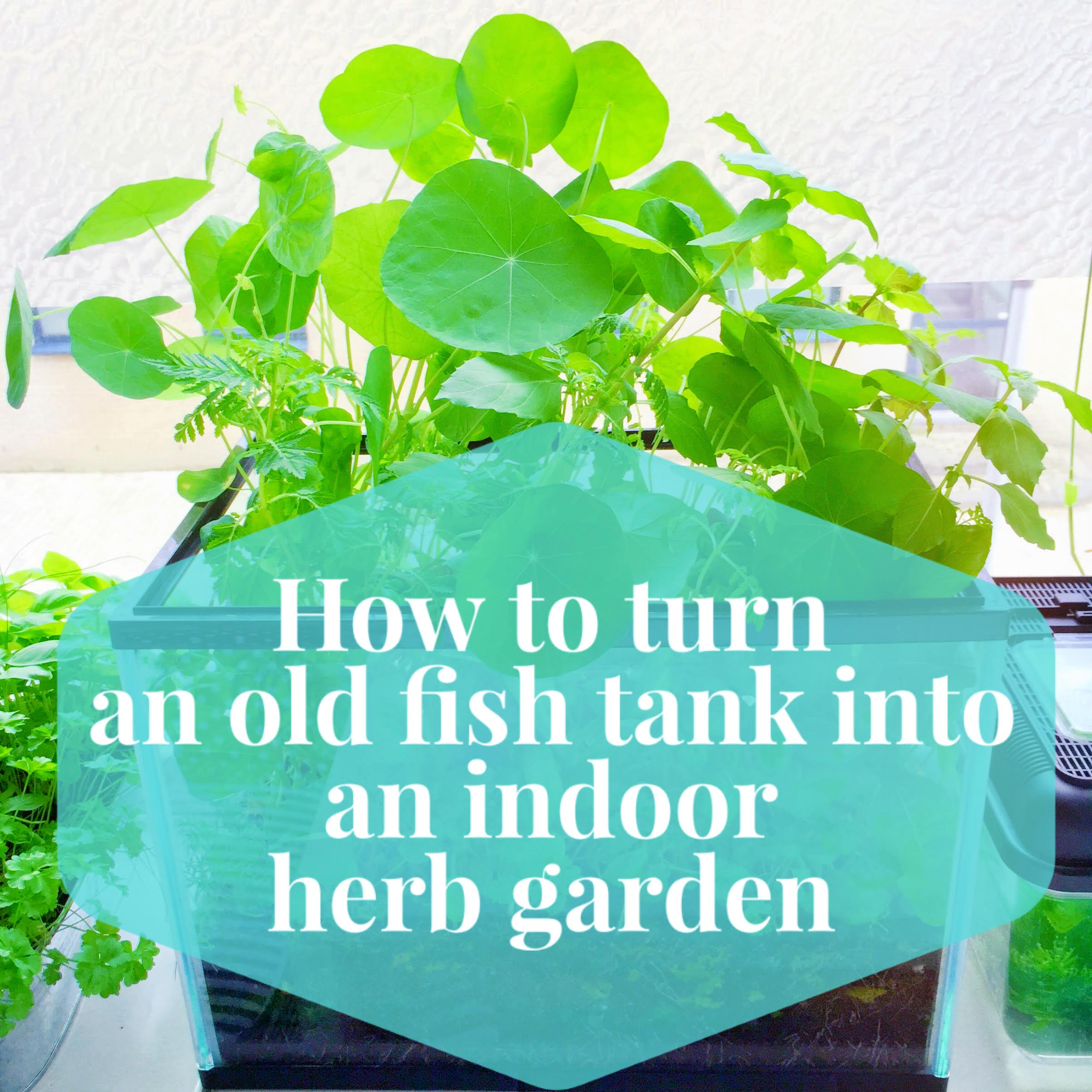 How To Turn An Old Fish Tank Into An Indoor Herb Garden Lia Belle